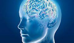 Beneficios Mentales del Sirope de Savia